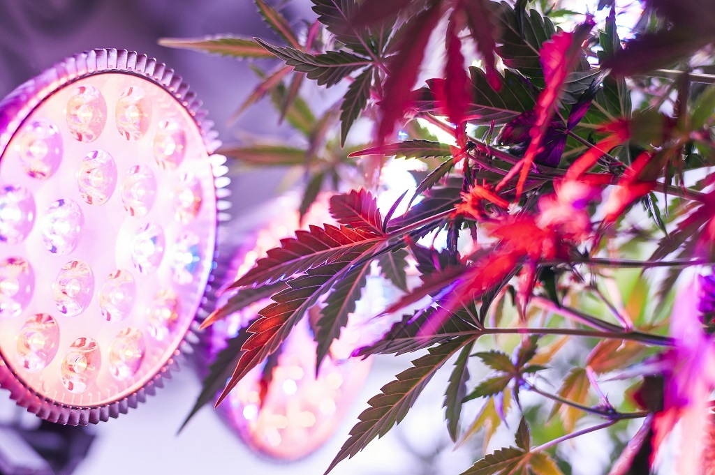 Types and differences of LED grow lights